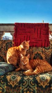 Das perfekte Sofa für Zuhause finden
