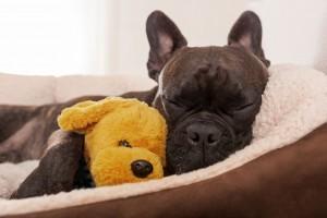 Hunde in der eigenen Wohnung: Ist das grundsätzlich erlaubt?